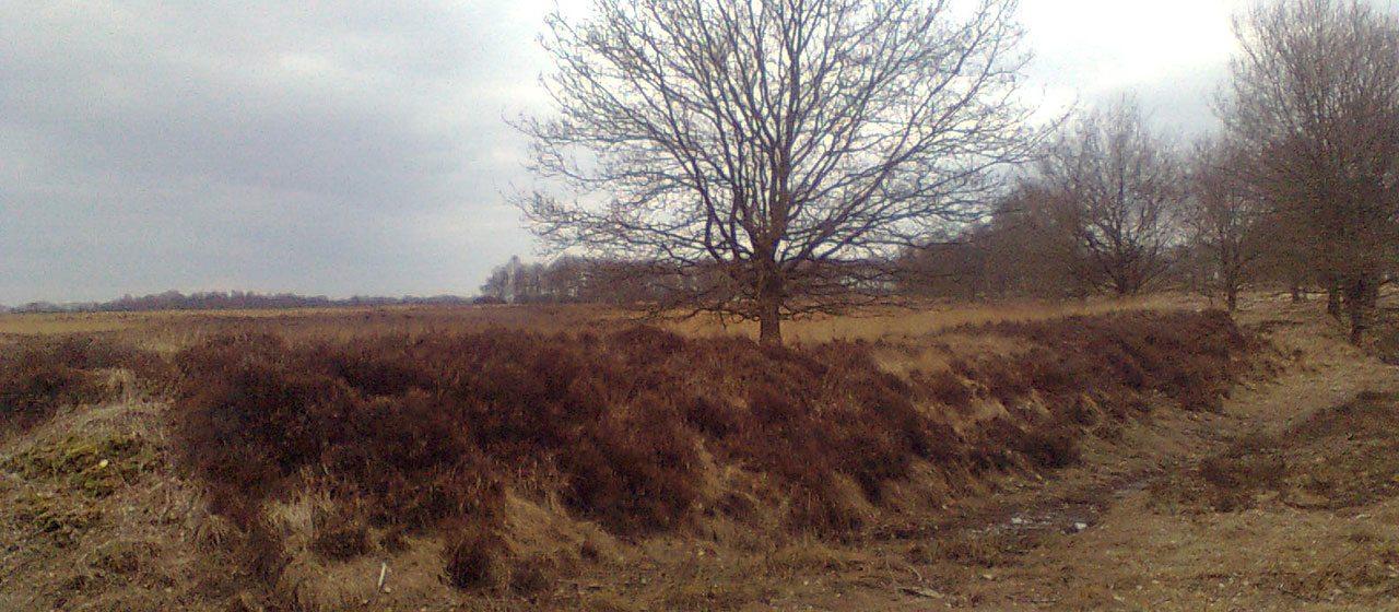 Frieslandriegel